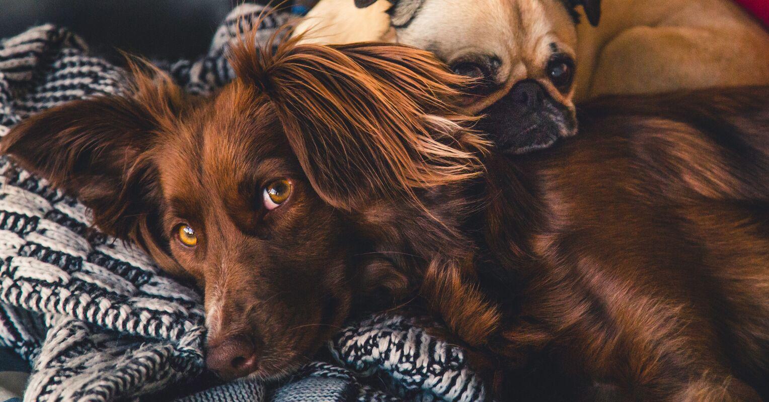 ¿Quién es más inteligente: perros o gatos?